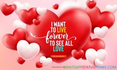 Love Romantic Status Video Download