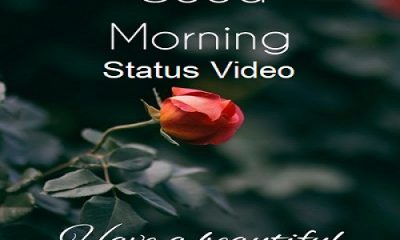 Good Morning Status Videos Download