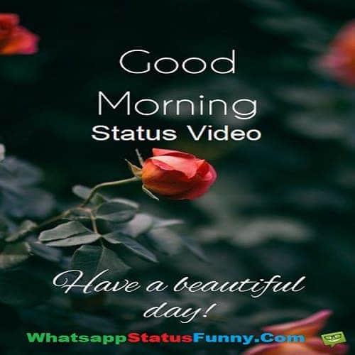 Good Morning Status Videos Download