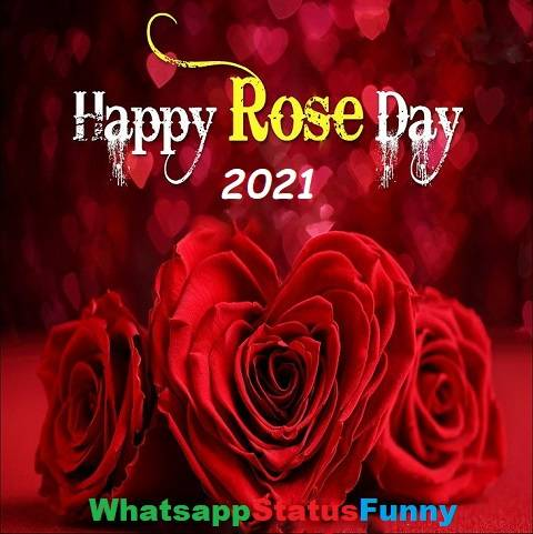 Happy Rose Day 2021 Status Video Download