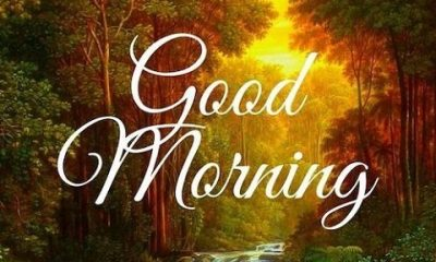 Good Morning Status Video Download For Whatsapp